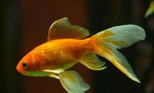 Anche i pesci sono esseri senzienti!